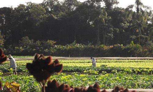7 principios y aspectos de la Agroecología