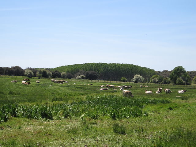 La ganadería extensiva y la ecológica se realizan en espacios abiertos.