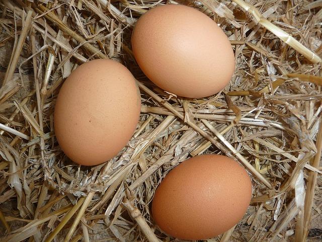 Huevos producidos en granjas ecológicas