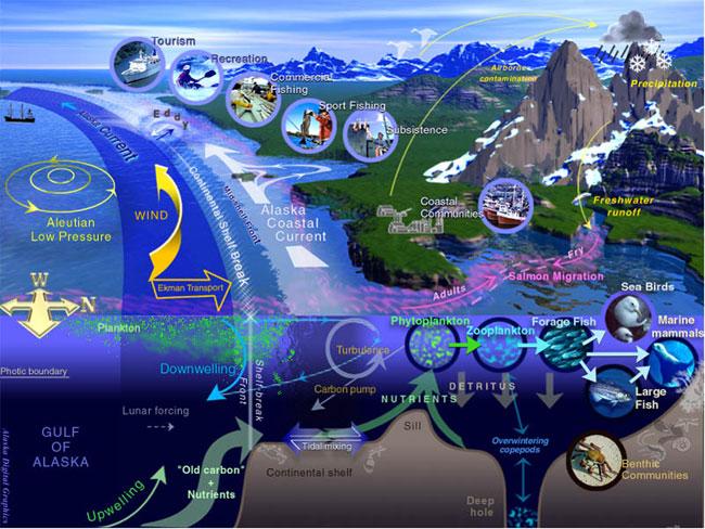Los ecosistemas marinos al igual que otros ecosistemas tienen hábitats donde se encuentran múltiples especies interactuando entre sí, con otras y con los factores abióticos. Cada nivel dentro del ecosistema es indispensable para que haya balance de materia y energía.