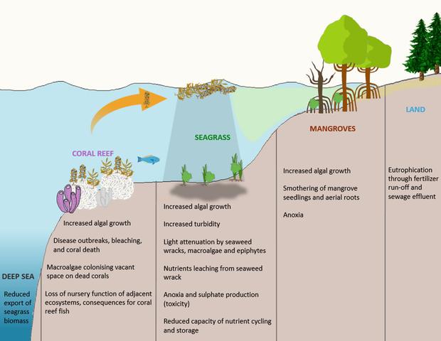 Cambios repentinos en el ambiente pueden cambiar el funcionamiento de los ecosistemas, llevándolos a la desaparición.