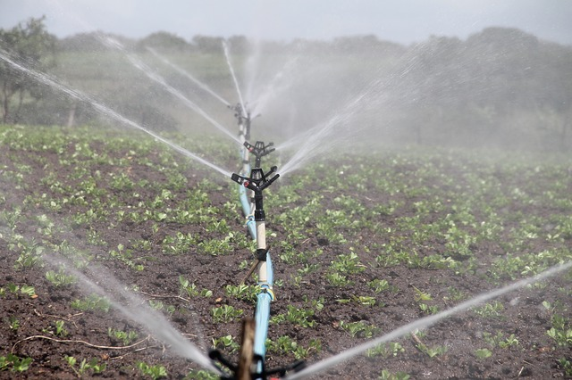 Cultivo con un sistema de riego por aspersión