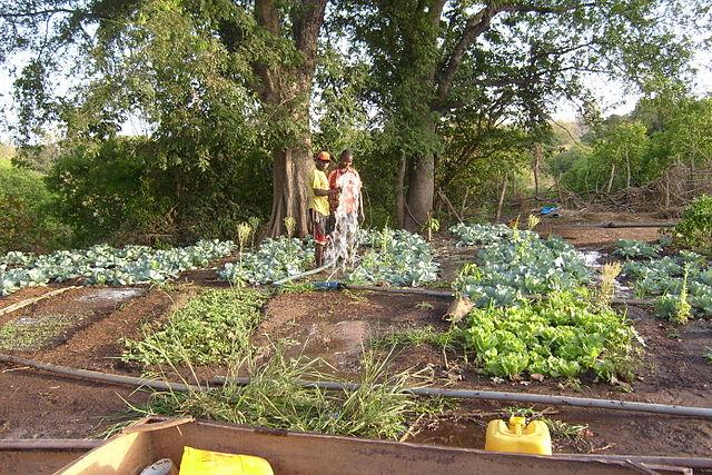 Silvicultura en Senegal