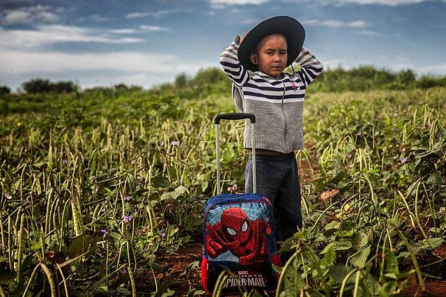 La agricultura regenerativa incrementa la economía familiar y mejora el medio ambiente