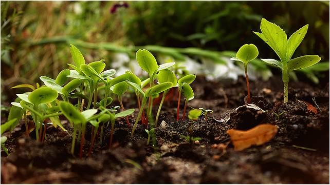 Plantas germinando y cubriendo el suelo