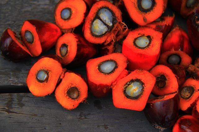Fruto de la palma aceitera