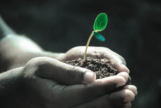 Los EM se usan en agricultura regenerativa