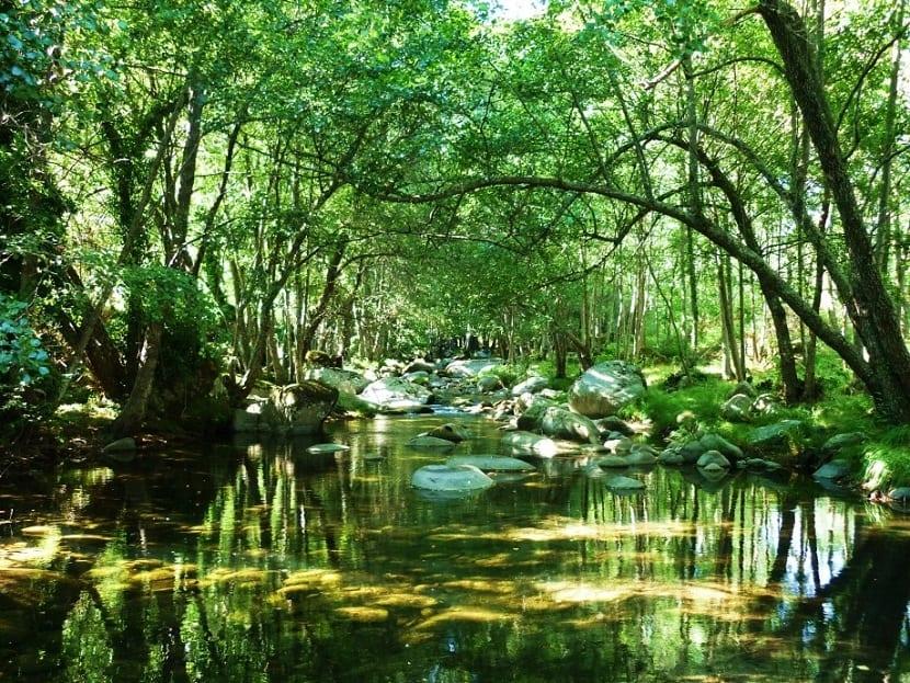 5 cosas que necesitas para crear un ecosistema artificial