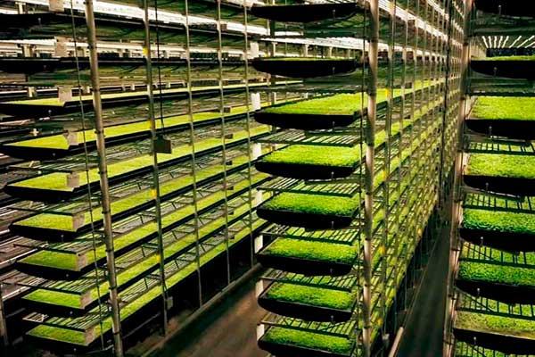 Cultivos verticales: ¿Es rentable este tipo de agricultura?