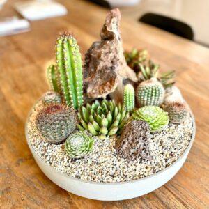 Cómo cultivar Cactus y Suculentas en casa